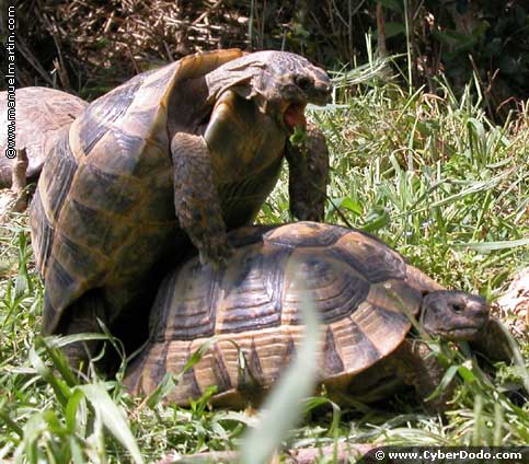 There are more than 300 species of tortoises