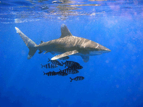 Sharks form a huge family comprising several hundred individual species