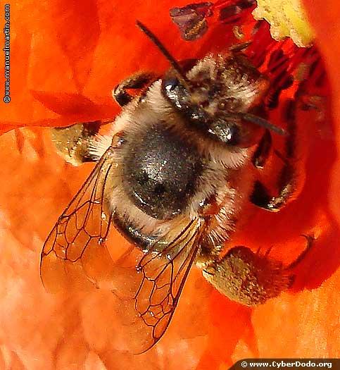 Las abejas, indispensables para la humanidad