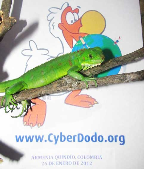 Kyllian and CyberDodo are committed to the protection of the Rights of the Child and Biodiversity